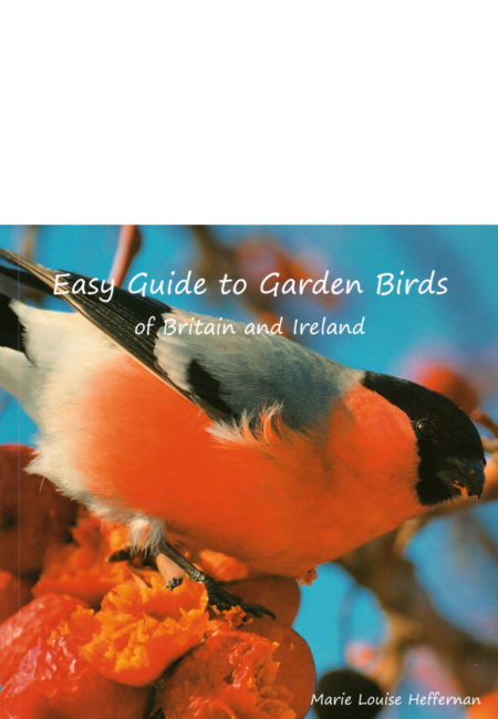 Easy Guide to Garden Birds
